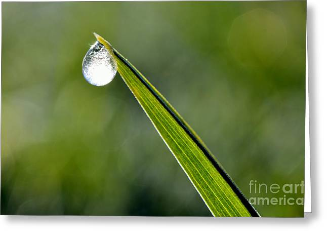 Frost On Blade Of Grass Greeting Card