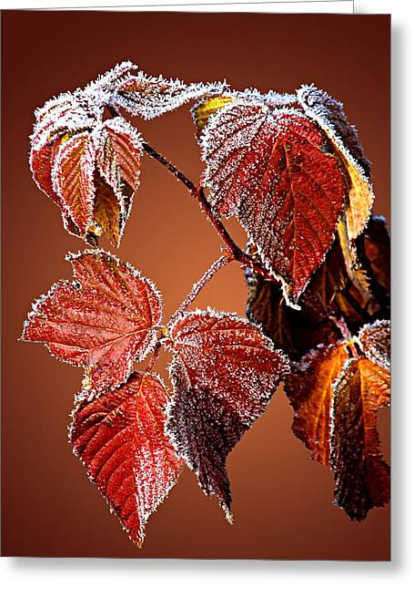 Greeting Card featuring the photograph Frosted Leaves by Judy  Johnson