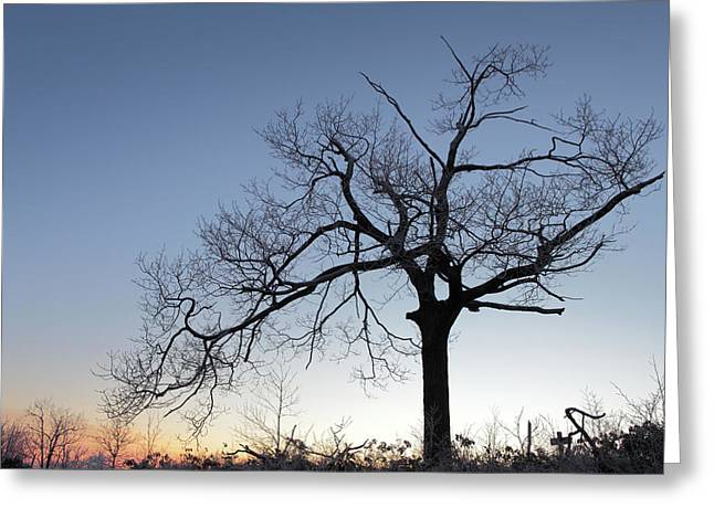 Frosty Dawn Majestic Tree Greeting Card by John Stephens