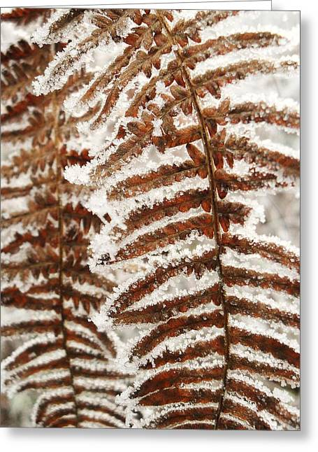 Frosty Fern Greeting Card