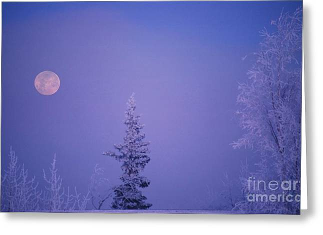Frosty Moon Greeting Card by Ronnie Glover