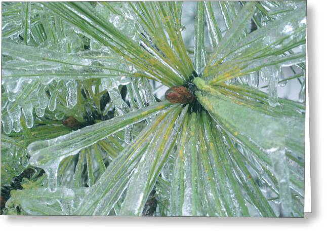 Frozen Assets Greeting Card by Linda Pope