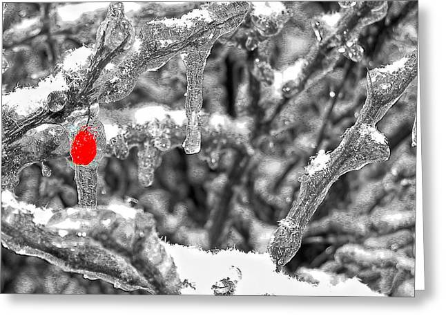 Frozen Berry Greeting Card