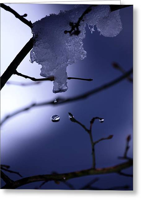 Frozen But Still Wet Greeting Card by Christine Gauthier