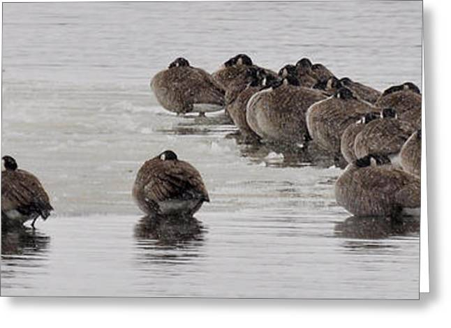 Greeting Card featuring the photograph Frozen Flock by Kevin Munro