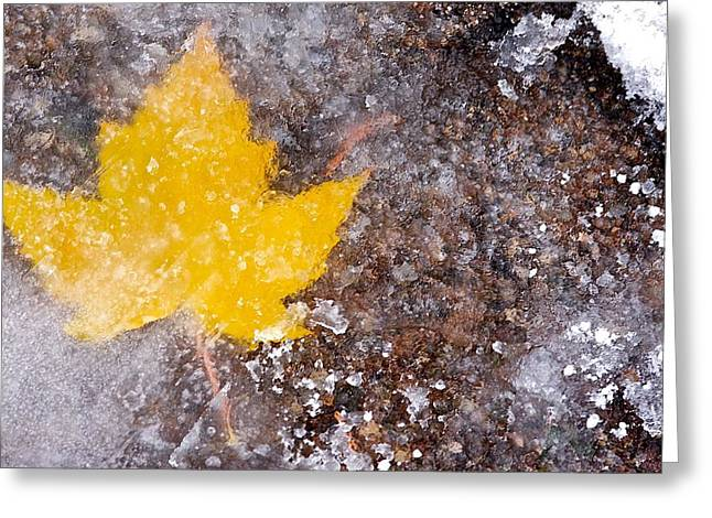 Greeting Card featuring the photograph Frozen Leaf by Scott Holmes