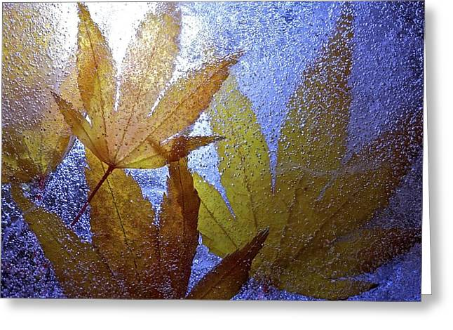 Greeting Card featuring the photograph Frozen Leaves by Scott Holmes