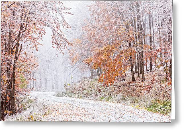 Frozen Road In Frosted Forest Greeting Card by Evgeni Dinev