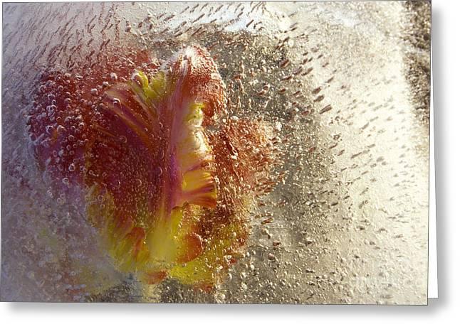 Frozen Tulip 2 Greeting Card