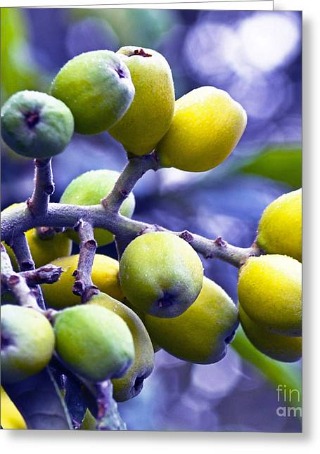 Greeting Card featuring the photograph Sicilian Fruits by Silva Wischeropp