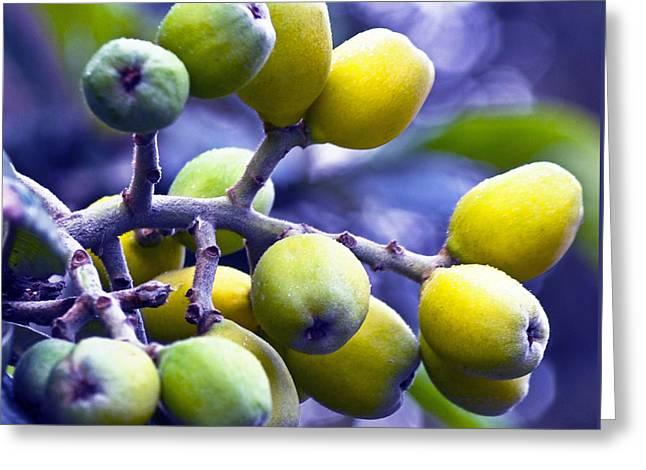 Sicilian Fruits Greeting Card