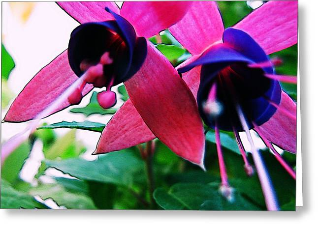 Fuchsia Abstraction Greeting Card