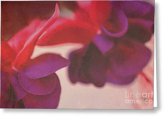 Fuchsia Greeting Card by Angela Bruno