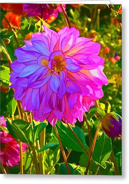Fuchsia Delight Greeting Card by Ken Stanback