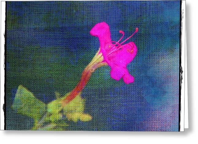 Fuchsia Flower Greeting Card by Judi Bagwell