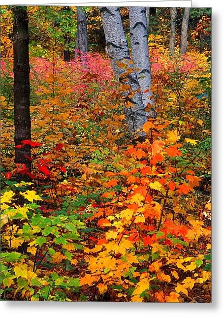 Full Fall Palette Greeting Card