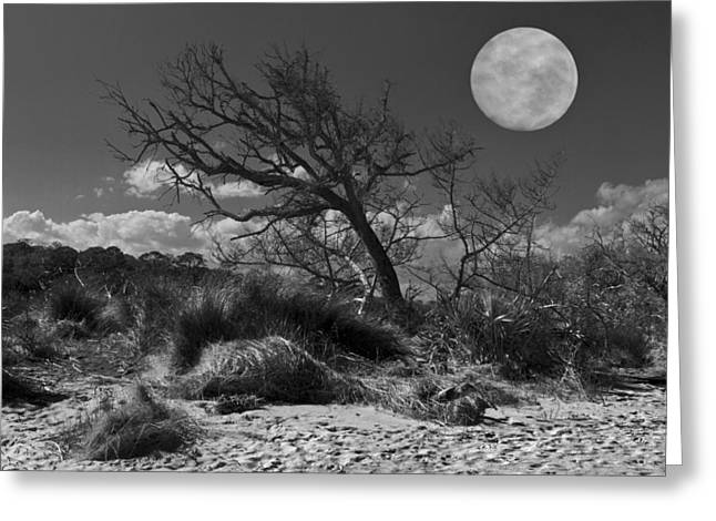 Full Moon Over Jekyll Greeting Card