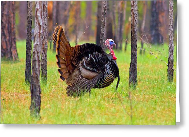 Full Strut 2 Greeting Card by Wild Expressions Photography