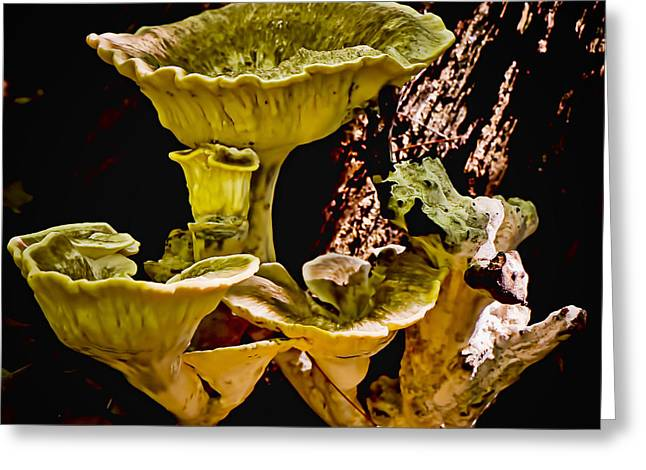 Fungus Among Us Greeting Card by Michael Putnam