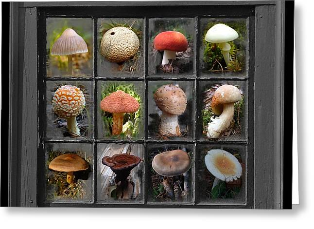 Fungus By Windowlight Greeting Card