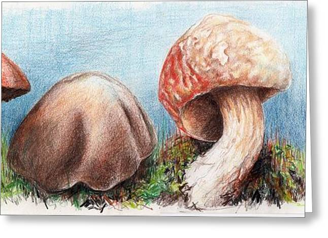 Fungus Panorama Greeting Card