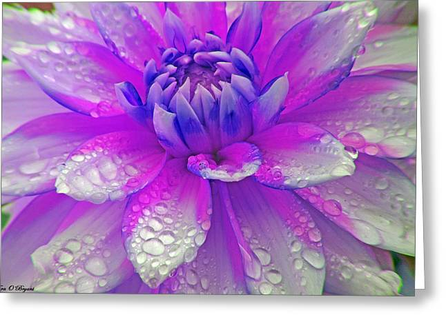 Fusia Flower Greeting Card