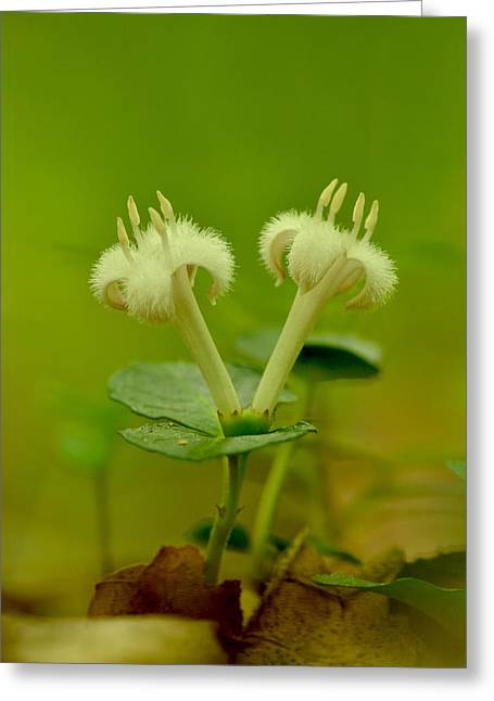 Greeting Card featuring the photograph Fuzzy Blooms by JD Grimes
