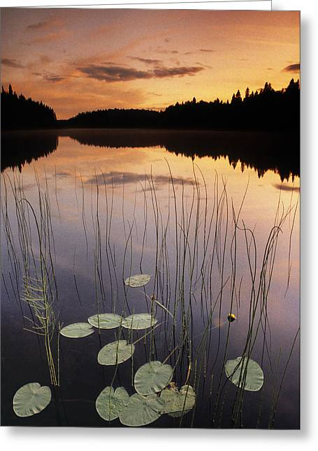 Fv5205, Natural Moments Photography Two Greeting Card by Darwin Wiggett