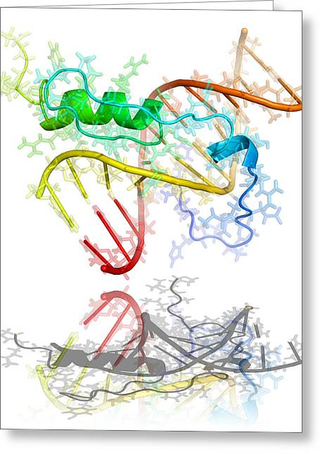 Gaga Transcription Factor Molecule Greeting Card by Laguna Design