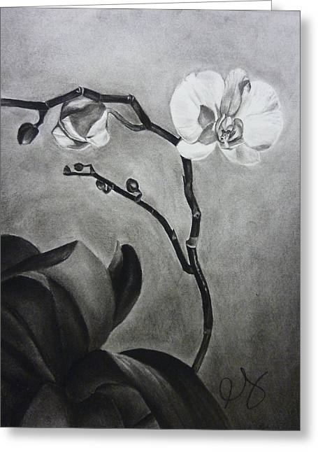 Galen's Orchid Greeting Card