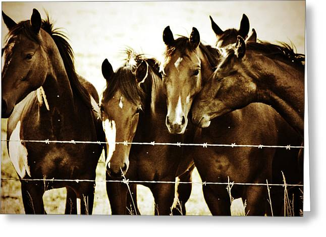 Galloping Brothers  Greeting Card by Empty Wall