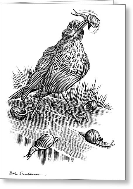 Garden Bird Catching Snails, Artwork Greeting Card