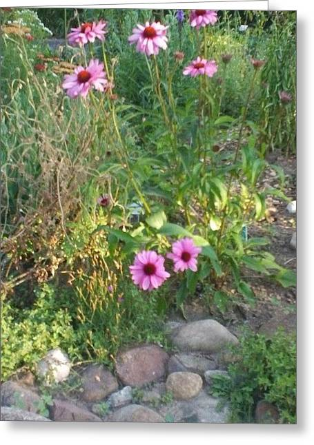 Garden Flowers And Rocks Greeting Card by Thelma Harcum