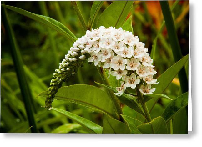 Garden Flowers Greeting Card by Matt Dobson