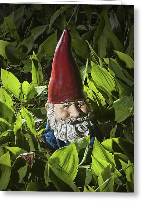 Garden Gnome No 0065 Greeting Card by Randall Nyhof
