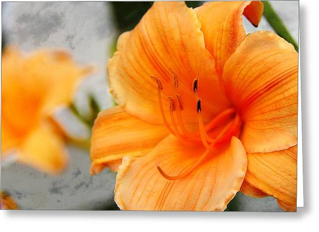 Greeting Card featuring the photograph Garden Lily by Davandra Cribbie
