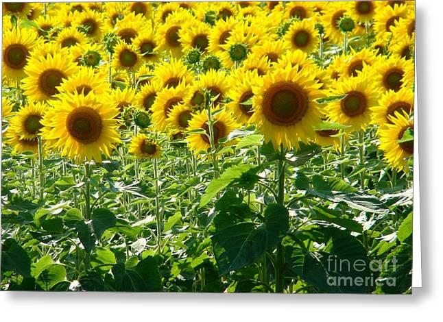 Garden Of Sunshine Greeting Card