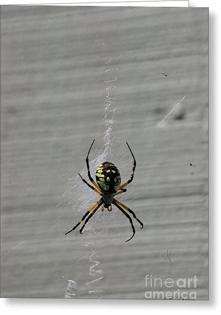 Greeting Card featuring the photograph Garden Spider by Tannis  Baldwin