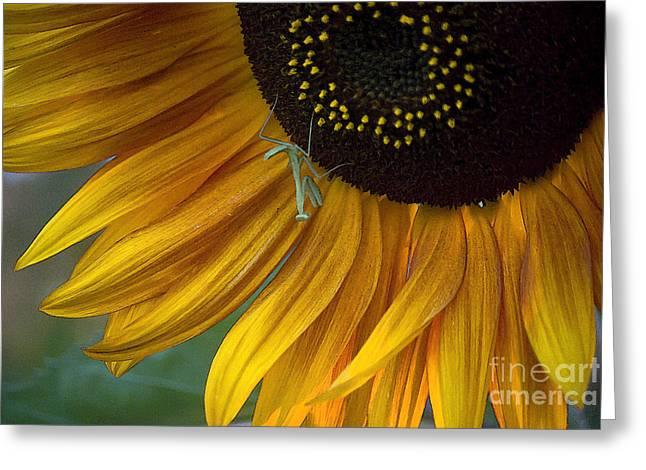 Garden's Friend Greeting Card by Jim and Emily Bush