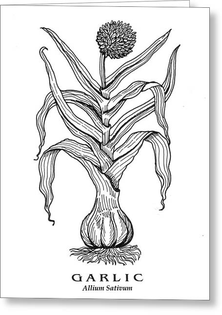 Garlic Botanical Greeting Card