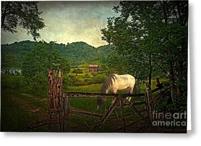 Gate To The Past Greeting Card by Lianne Schneider
