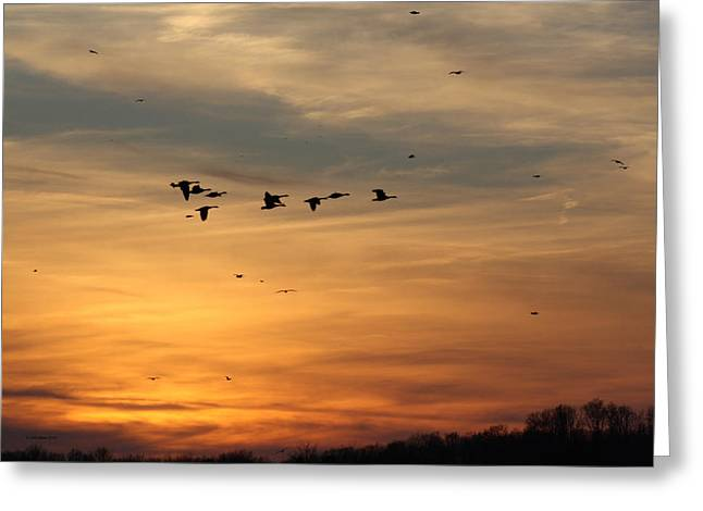 Geese In Sunset Greeting Card