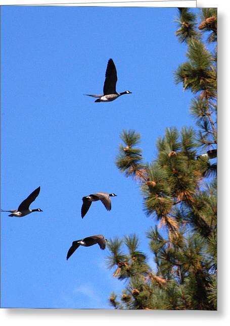 Geese In Tahoe Greeting Card by Ernie Claudio
