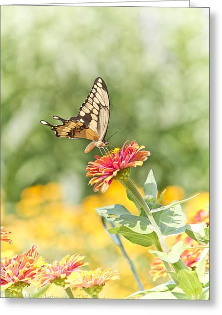 Gentle Landing Greeting Card by Straublund Photography