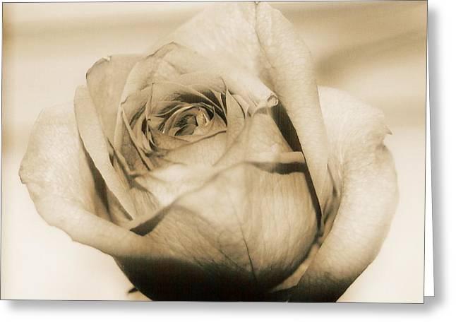 Gentle One Greeting Card by Gloria Warren