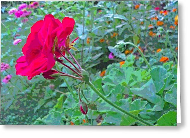 Geranium In Flower Garden Greeting Card