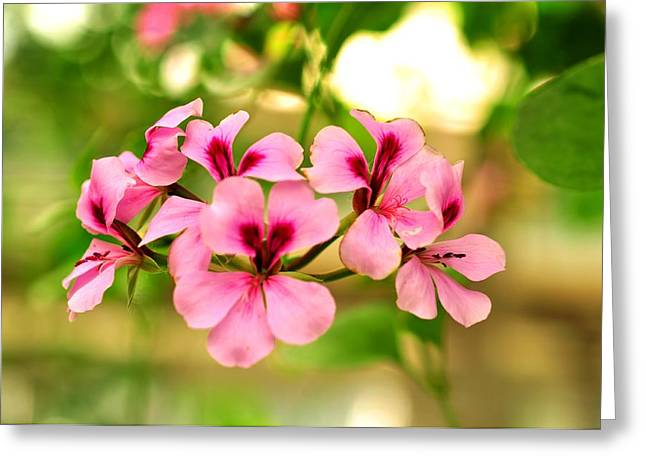 Greeting Card featuring the photograph Geranium  by Puzzles Shum