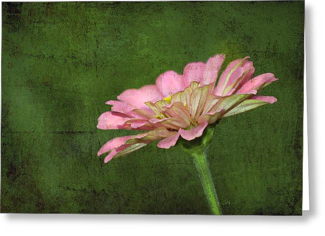 Greeting Card featuring the photograph Gerber Daisy by Sami Martin