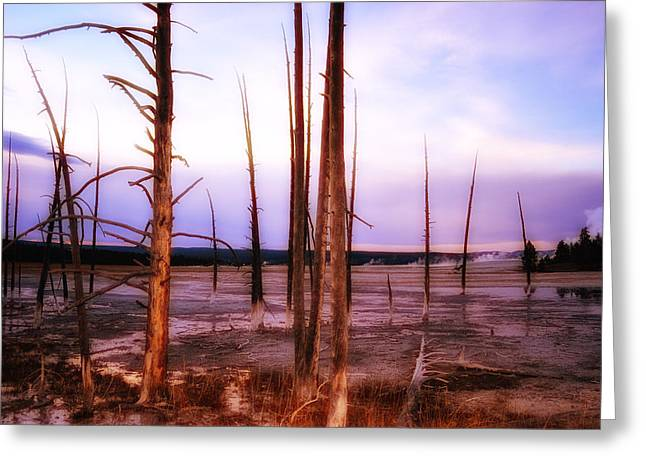 Greeting Card featuring the photograph Geyser Basin Trees by Kelly Reber