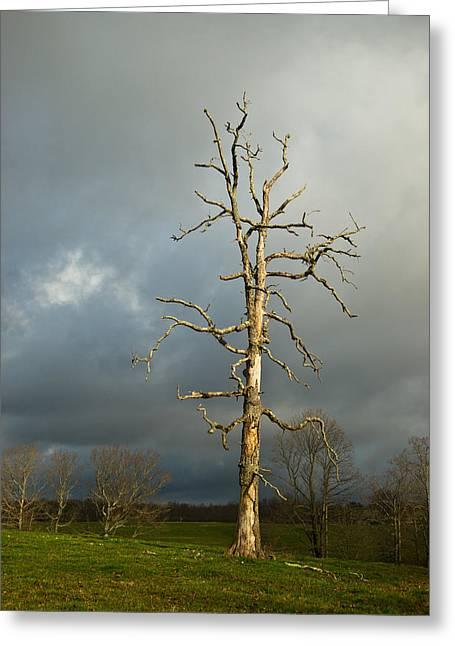Ghost Tree Greeting Card by Douglas Barnett